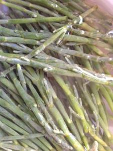 sea asparagus just minutes after harvest